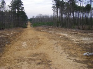 logging road in Arkansas